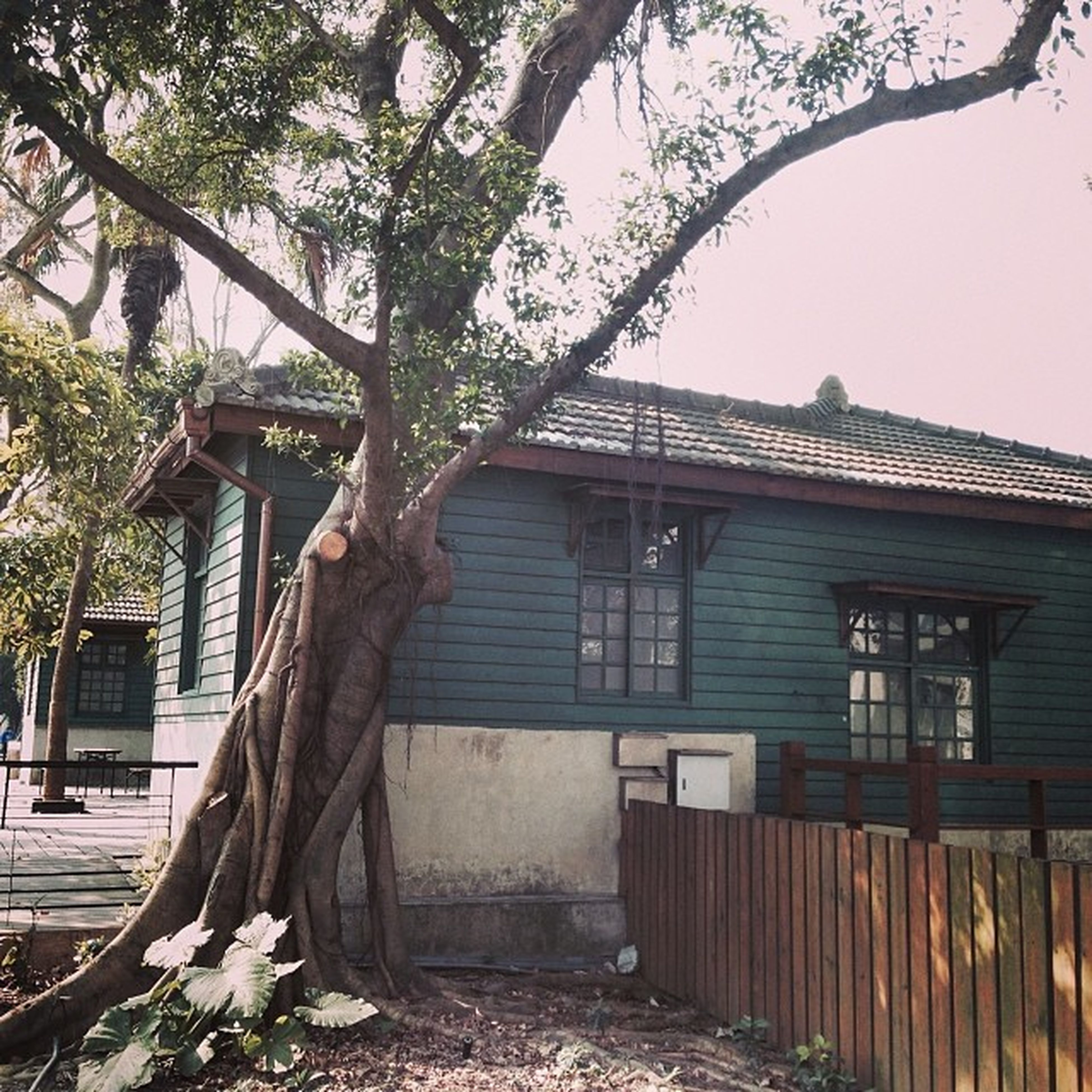 architecture, building exterior, built structure, house, tree, residential structure, window, residential building, building, branch, abandoned, day, plant, low angle view, outdoors, no people, growth, old, wood - material, sky