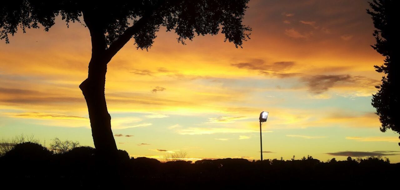 tree, sunset, silhouette, sky, no people, cloud - sky, nature, beauty in nature, tranquil scene, outdoors, scenics, growth, tranquility, day