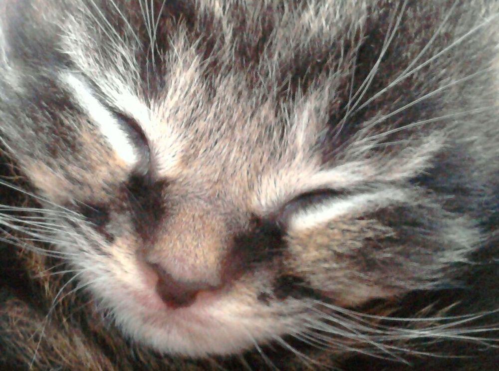 Dexter Kittens Sleepy Kittens Cute