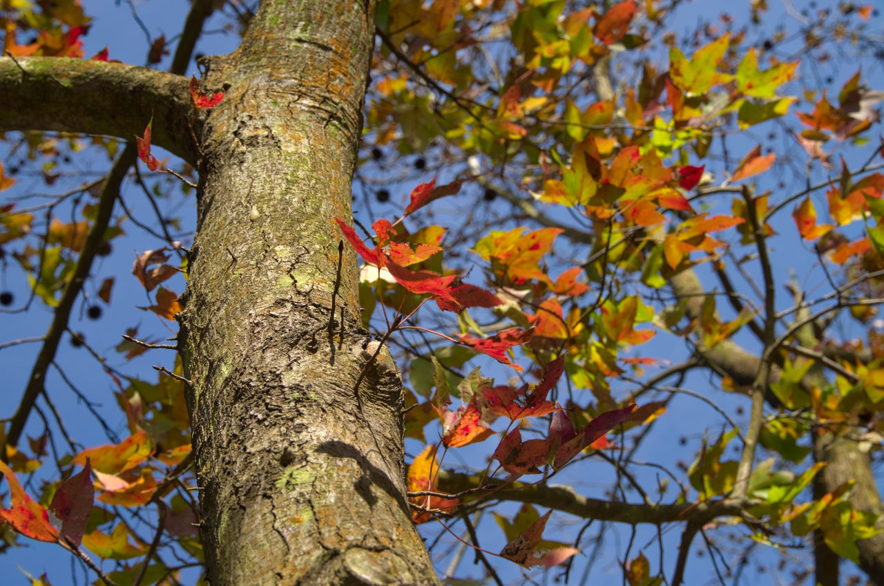 Autumn Beauty In Nature Branch DSLR Hong Kong Leaf Low Angle View Nature Outdoors Pentax Sky Tree