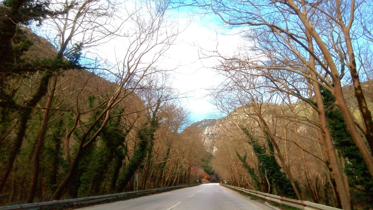 Hugging A Tree I Love Trees Highway The Purist (no Edit, No Filter) Car Driving near Ioannina, Greece Ipiros Eye4photography  EyeEm Nature Lover EyeEm Best Shots lenovo photography
