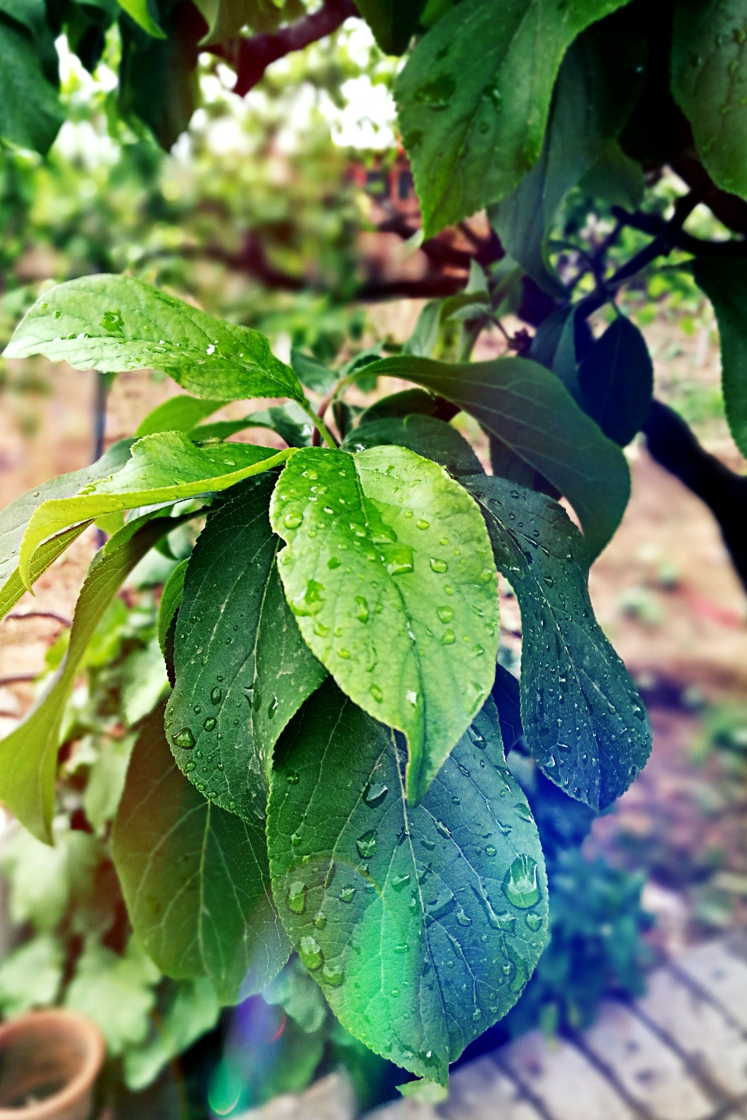 leaf, green color, growth, plant, nature, drop, close-up, freshness, no people, beauty in nature, outdoors, focus on foreground, wet, day, raindrop, fragility, water, branch, tree, flower, flower head