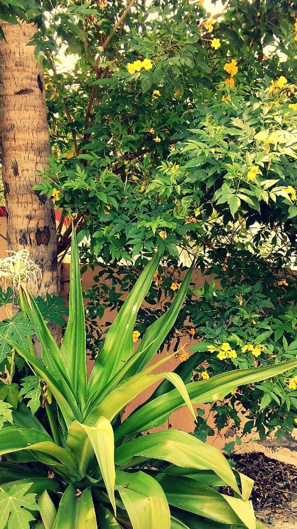 Nature Luv Green Green Green!