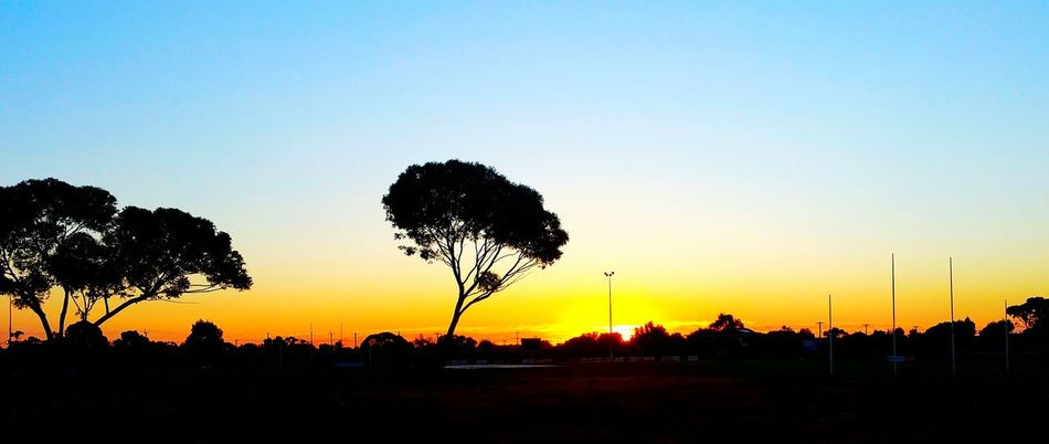 Sunset Silhouette Nature Tree Hoppers Crossing Beauty In Nature Outdoors Sky Australian Rules Football