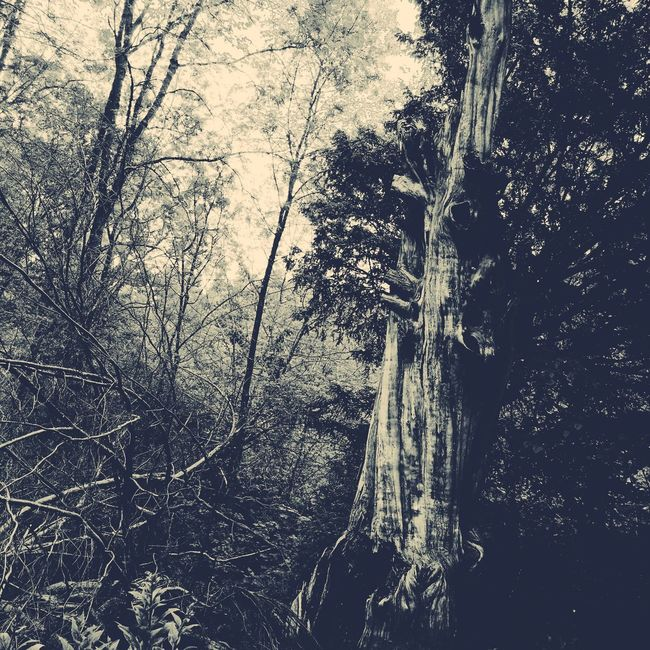 Amongst the trees Forest Mysterious Ethereal Haunted