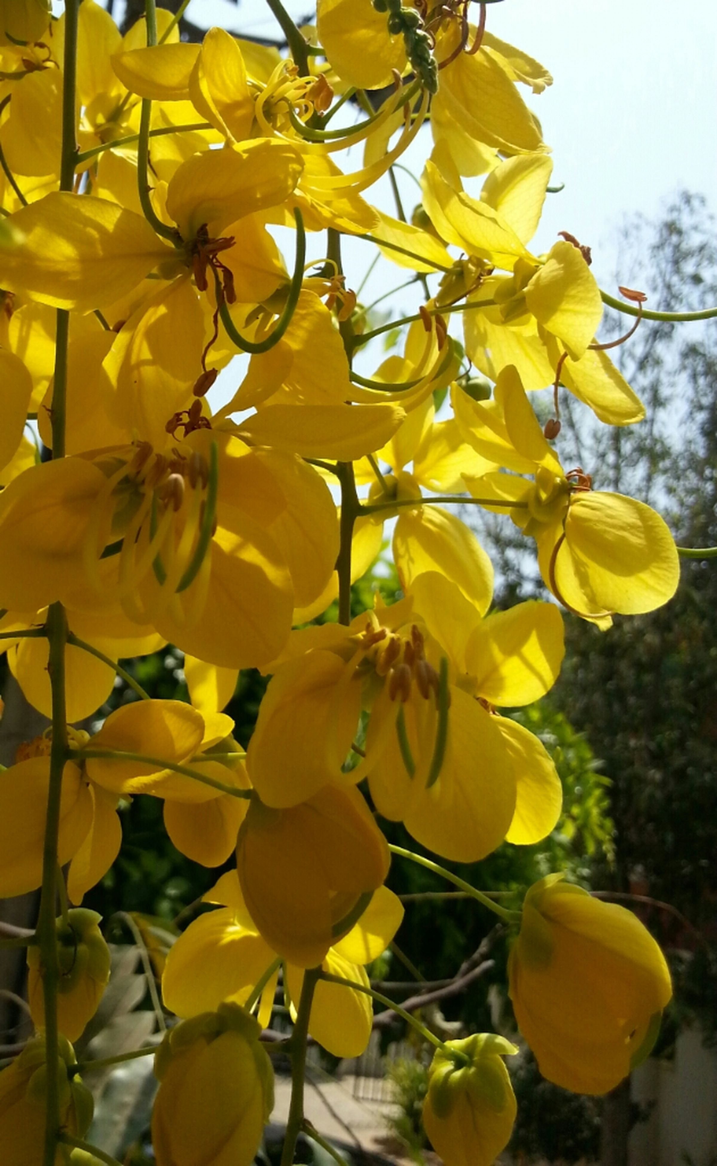 flower, yellow, freshness, growth, fragility, petal, beauty in nature, nature, blooming, focus on foreground, close-up, flower head, low angle view, plant, day, in bloom, tree, branch, leaf, blossom