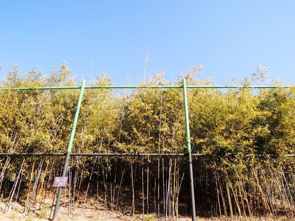 Hello World Sky EyeEm Nature Lover Taking Photos Bamboo Eye4photography  OpenEdit Gangreung ,Korea