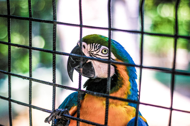 Animal Themes Beak Beauty In Nature Bird Birds🐦⛅ Close-up Focus On Foreground Macaw Parrot Multi Colored Perching Wildlife Zoology