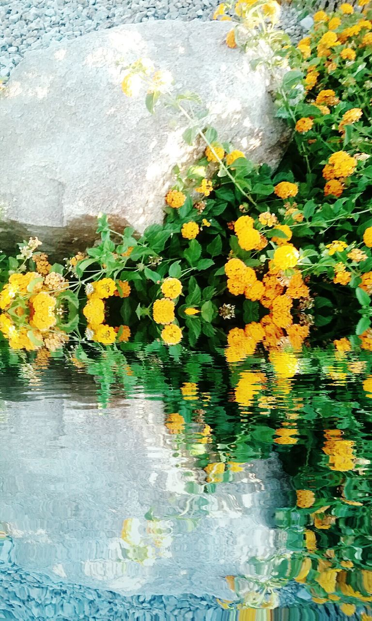 flower, fragility, water, nature, petal, leaf, beauty in nature, yellow, plant, growth, freshness, day, waterfront, flower head, outdoors, no people, floating on water, close-up, blooming