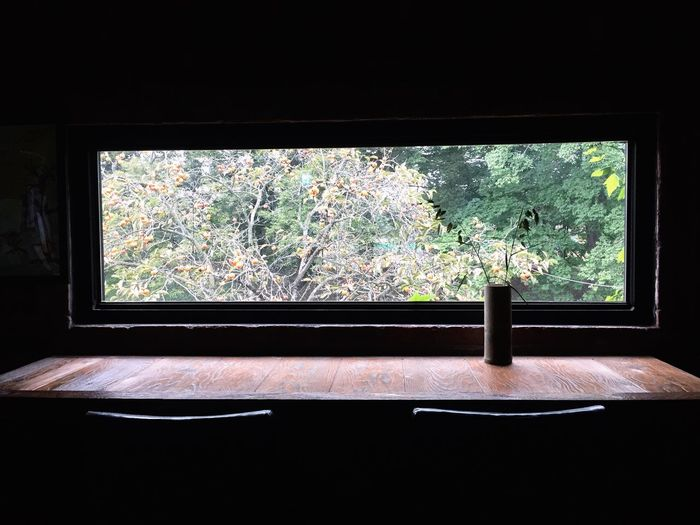 Window Tree Autumn In Darkness And In Light