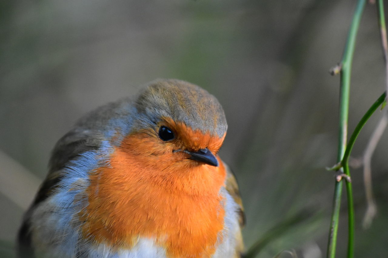 Robin Animal Themes Bird Animal Wildlife Animals In The Wild One Animal Close-up Outdoors Nature No People Beak Day Beauty In Nature Perching LONDON❤ Greenwich Park