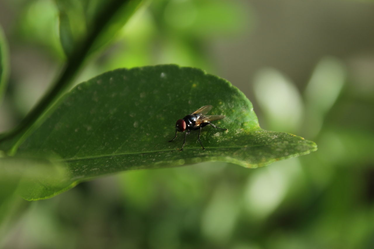 one animal, insect, animal themes, green color, animals in the wild, leaf, close-up, nature, no people, growth, animal wildlife, outdoors, day, ladybug