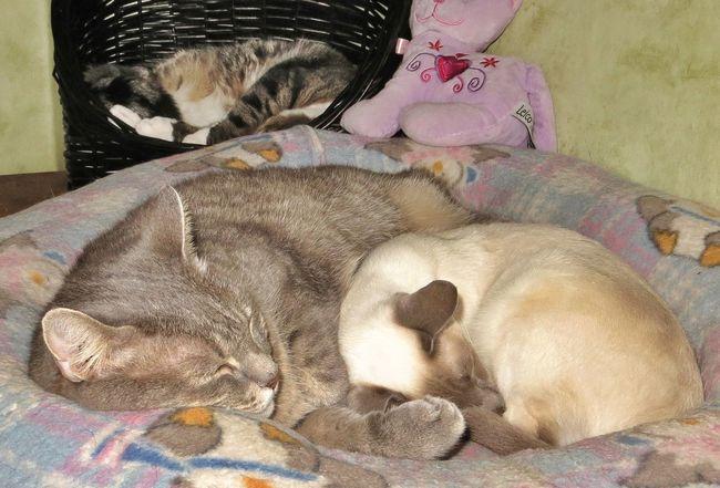 A rainy day - 7 Tadaa Community Cat Nap