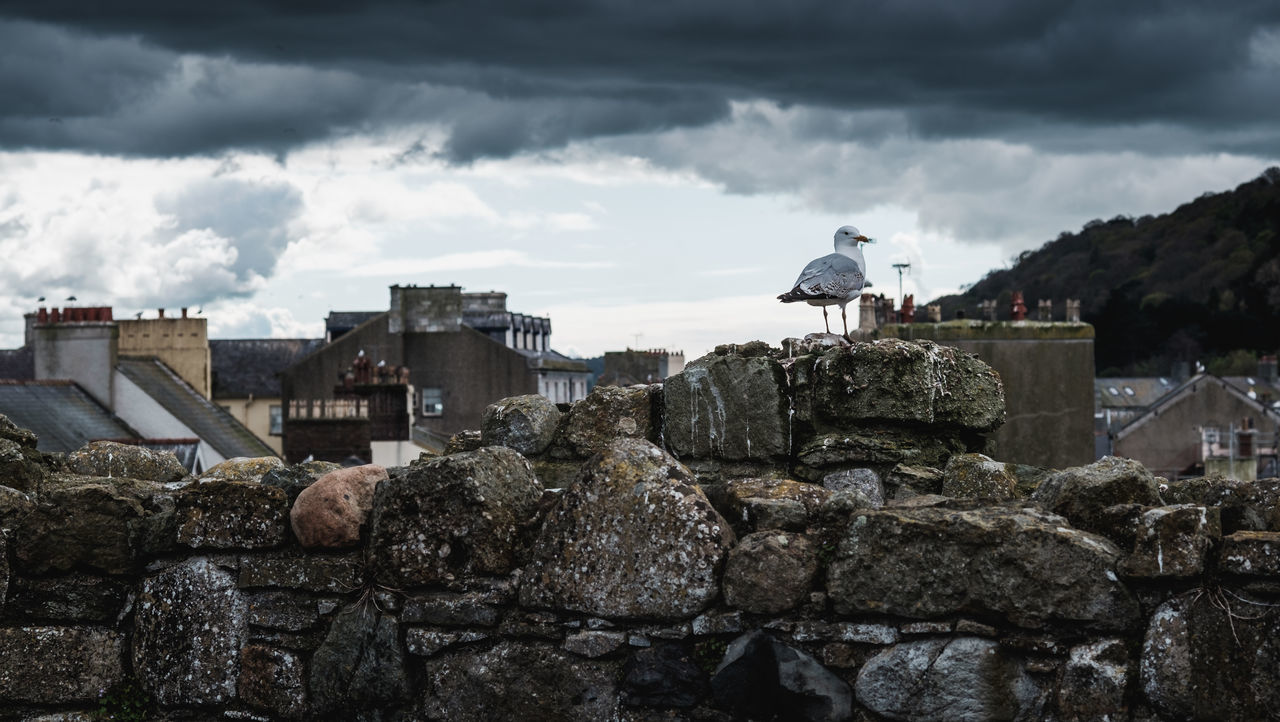 Animal Themes Architecture Beaumaris Bird Building Exterior Built Structure Cloud - Sky Day Nature Outdoors Real People Rock - Object Seagull Sky Stack