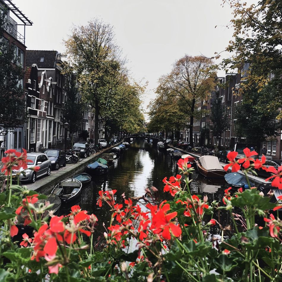 Jordaan Amsterdam Canal Amsterdam Fall In Amsterdam Pictetesque City