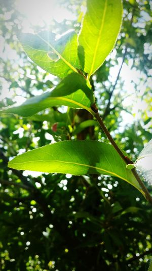 You never realize what you have until you can lose it at any moment. Enjoying Life Naturehippies Enjoy Nature Leaf Beautiful Nature Nature Beautiful Leafs Green