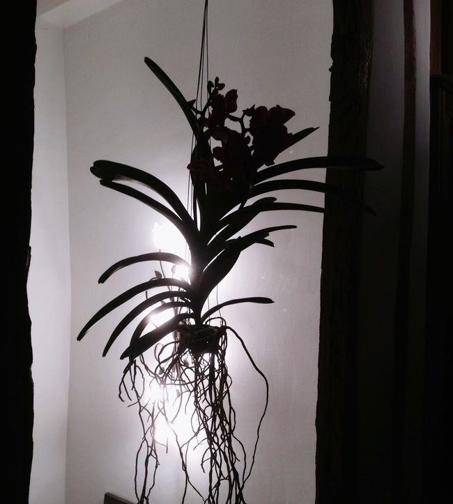 Shadow And Light Shadows On The Wall Shadow Photography Orchid