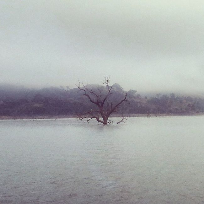 Lake Eildon Dead Tree Foggy Morning Water Mountain Eildon Victoria Australia Houseboat Livingthedream Seevictoria Riverscape Spookybeauty Eerie Beautiful Eerie Tree Eerie Mornings