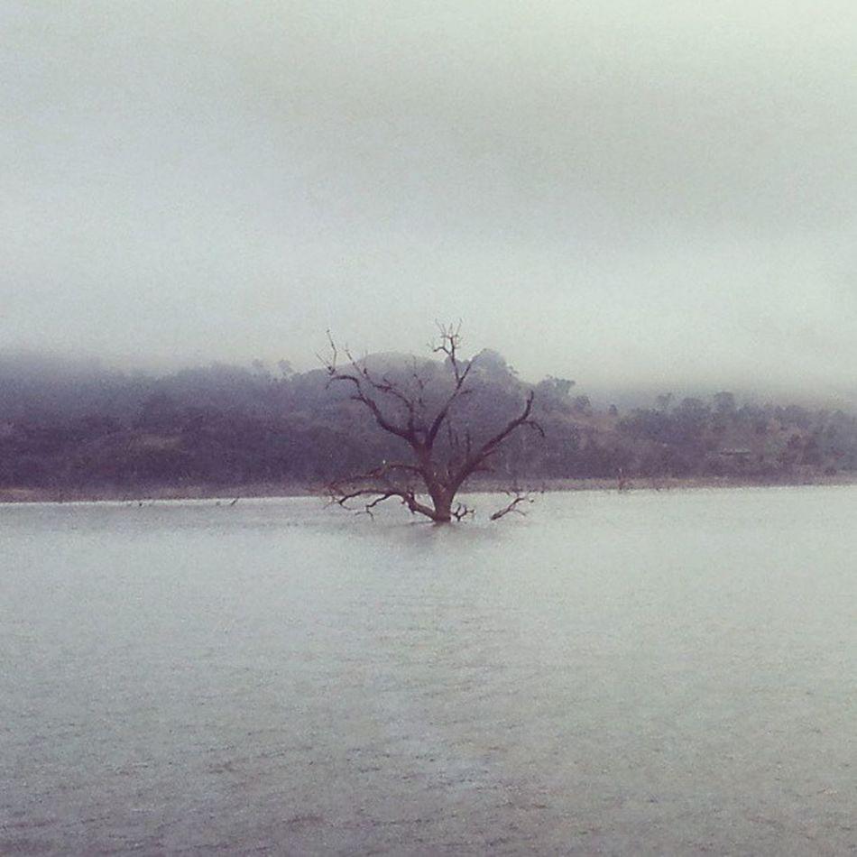 Lake Eildon Dead Tree Foggy Morning Water Mountain Eildon Victoria Australia Houseboat Livingthedream Seevictoria Riverscape Spookybeauty Eerie Beautiful Eerie Tree Eerie Mornings