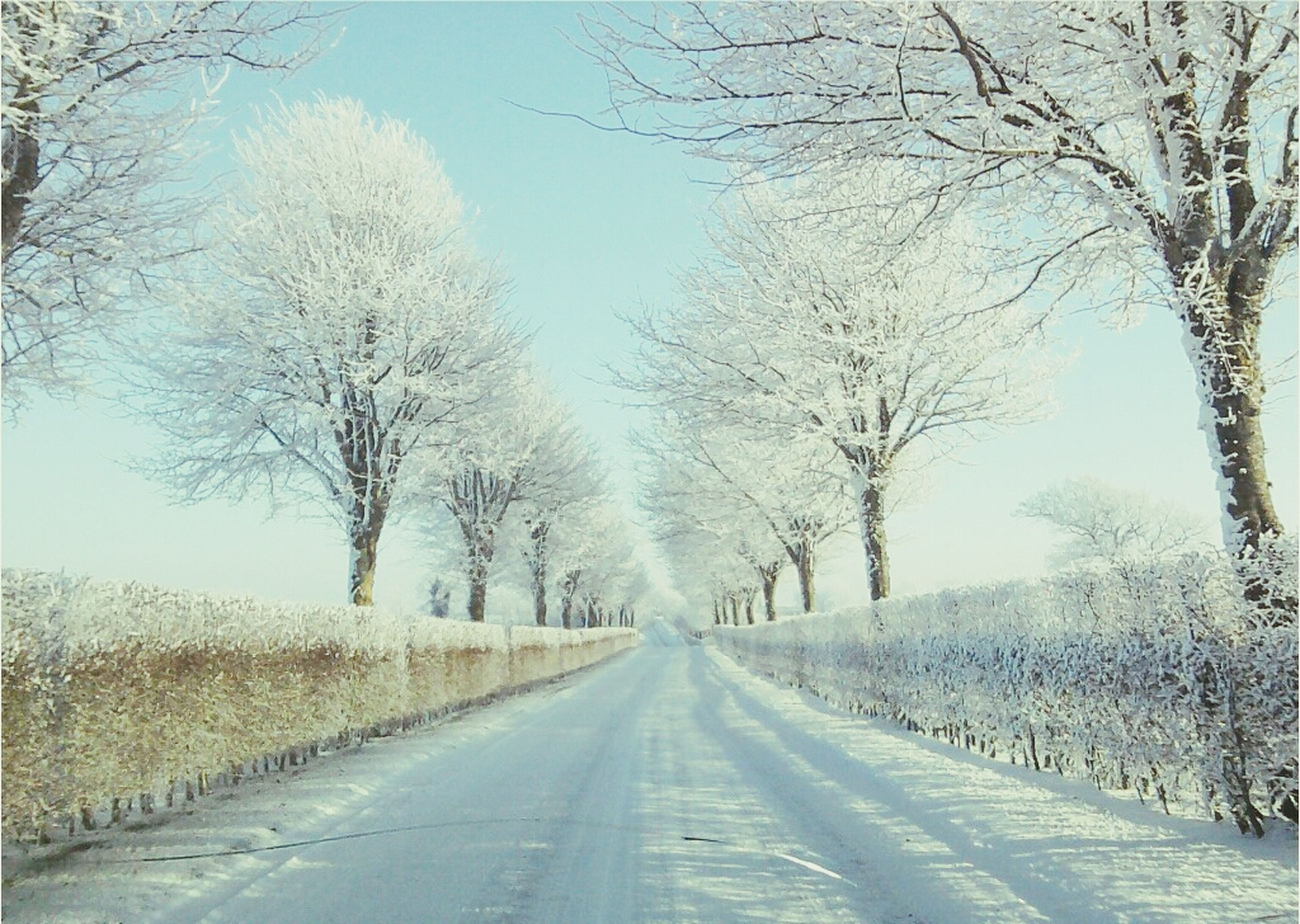 the way forward, diminishing perspective, bare tree, tree, vanishing point, transportation, road, country road, nature, branch, treelined, tranquility, winter, clear sky, empty road, tranquil scene, long, weather, cold temperature, snow