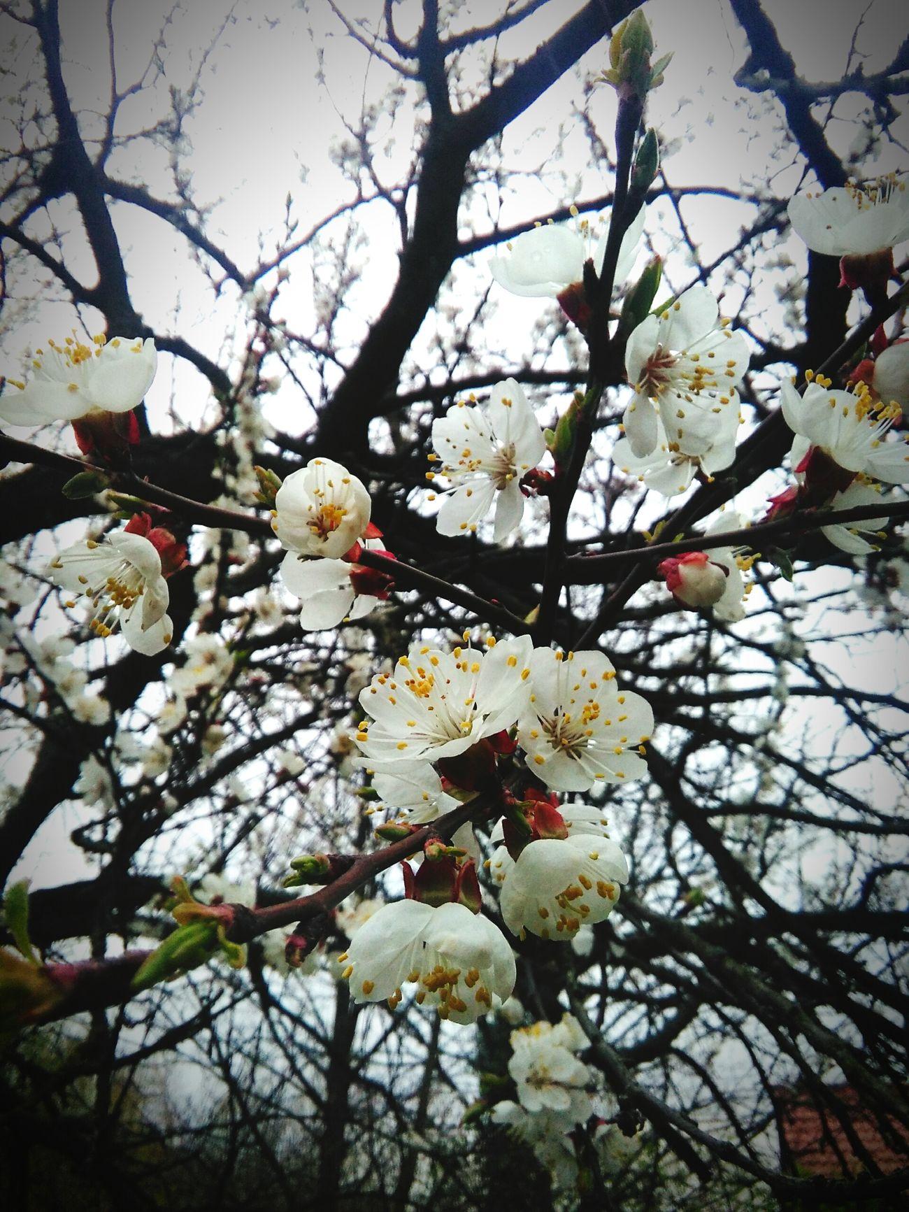 Nature Flower Poland 💗 POLISH GIRL ❤️ Fotography Love♡ Girl Kwiaty FolowMe ✌