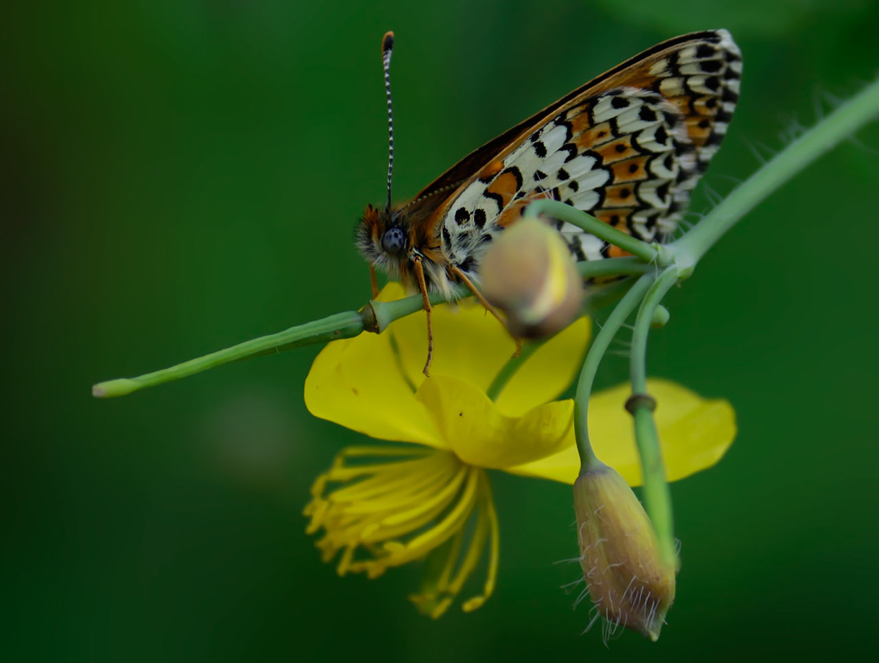 Beautiful stock photos of schmetterling, Animal Themes, Animal Wildlife, Animals In The Wild, Beauty In Nature