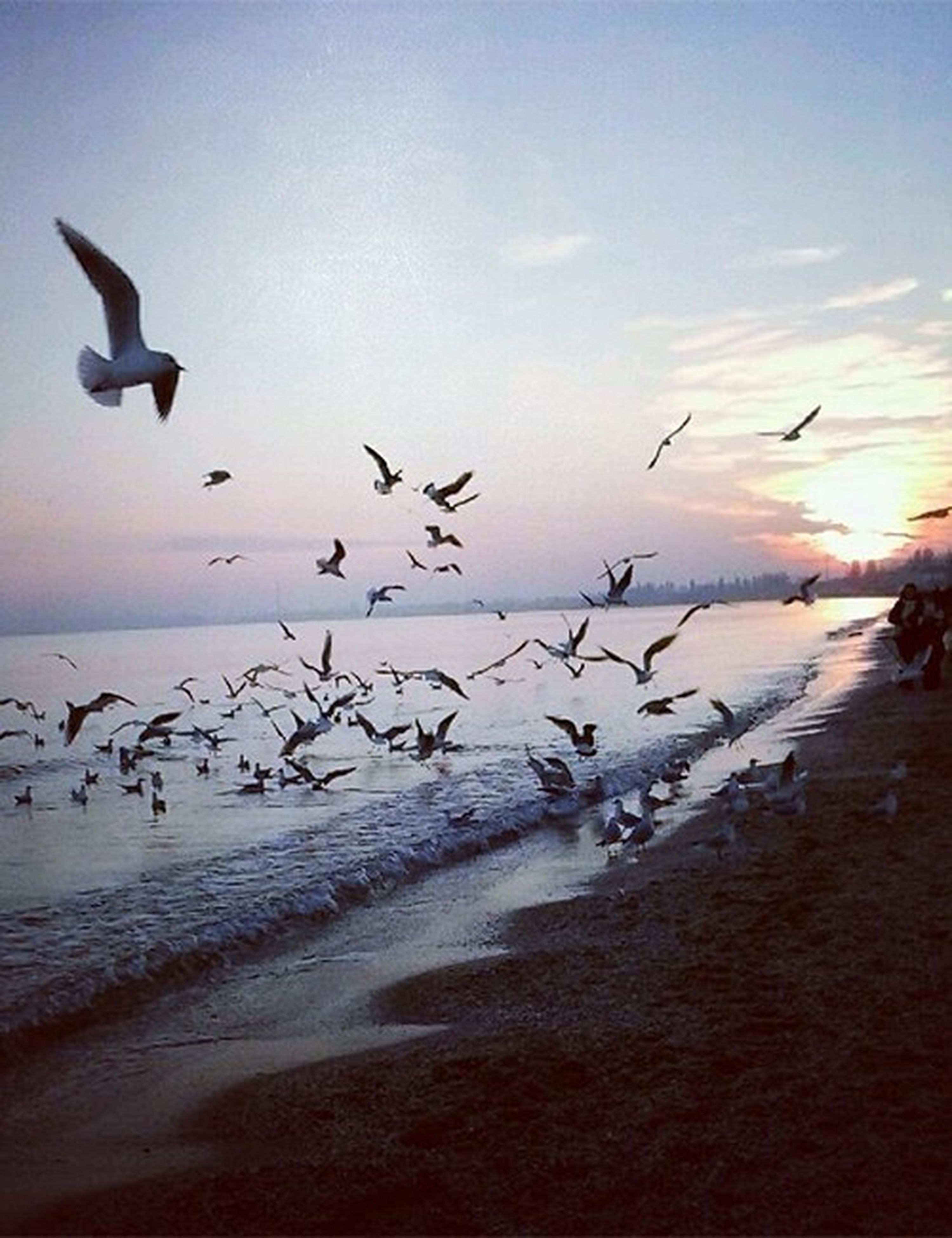 bird, animal themes, animals in the wild, flying, wildlife, water, flock of birds, sea, seagull, sky, spread wings, beach, horizon over water, nature, medium group of animals, mid-air, beauty in nature, shore, scenics