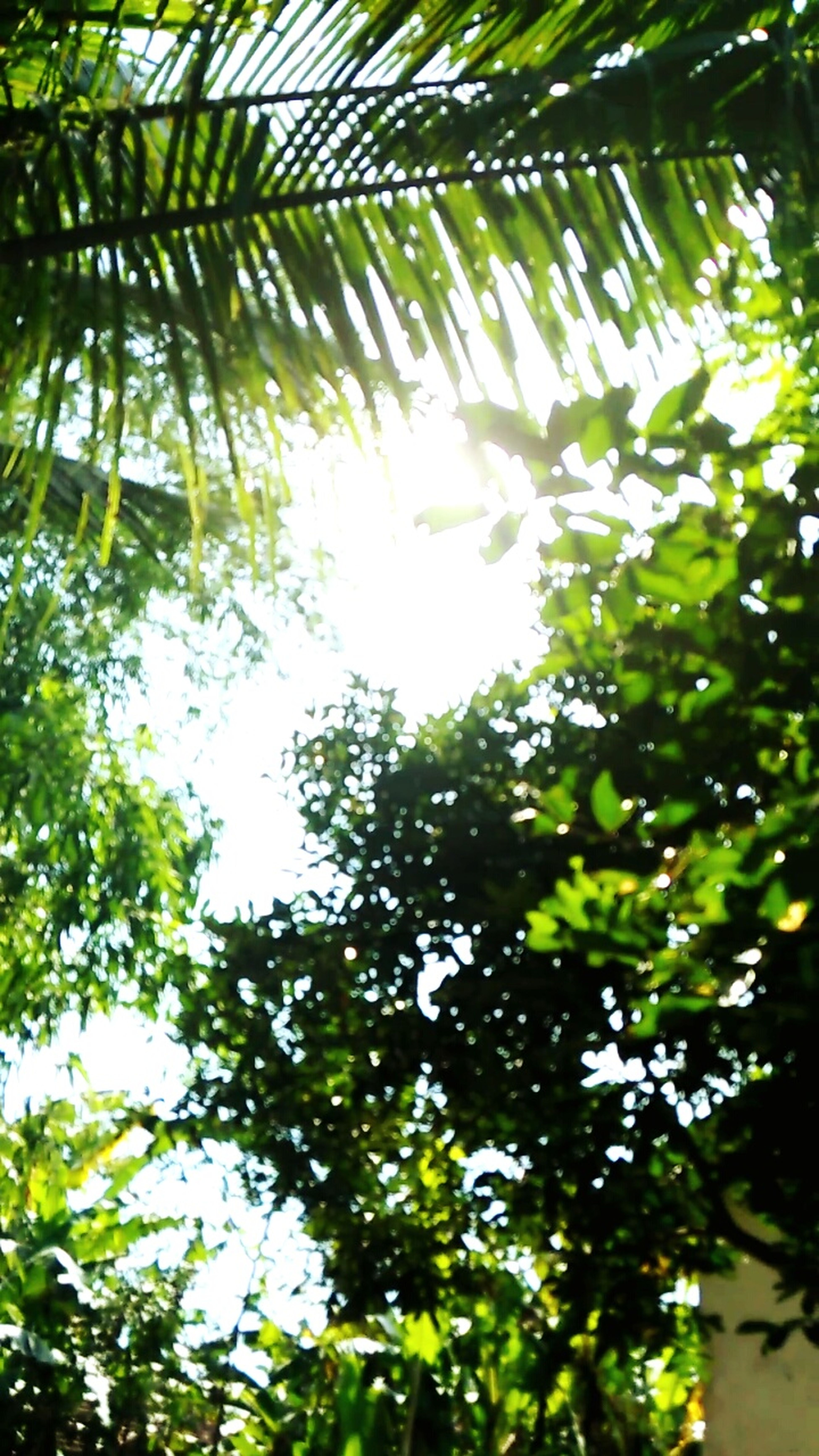 Leaf Green Color Wonderful Indonesia Sun Beauty In Nature