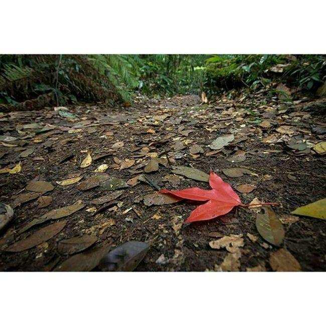 fall in love with nature . . 503พิชิตภูกระดึง ภูกระดึง ผาหล่มสัก Journeythailand Reviewthailand Travelthailand PUKRADUENG Loei THAILANND