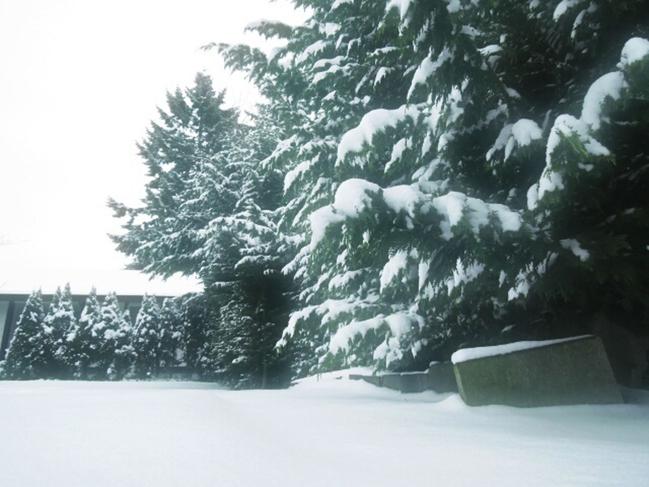 Winter Wonderland Snow Trees Snow Winter Landscape