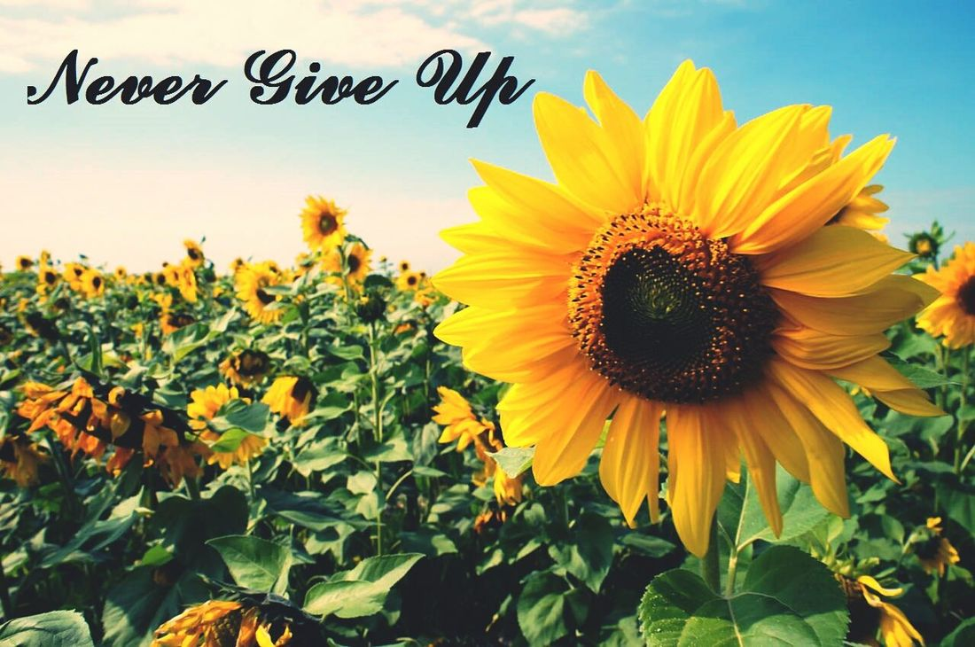 Bless Flowers Never Give Up Check This Out