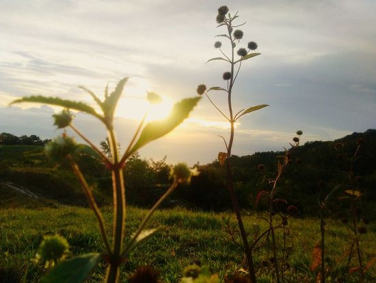 Sunset, nature, plants