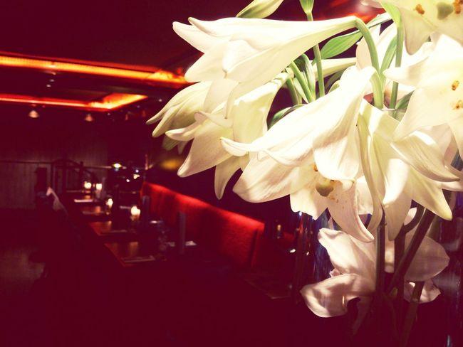 Restaurant Flowers Cosy Food