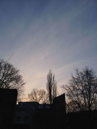 Silhouette Winter Trees Skyporn