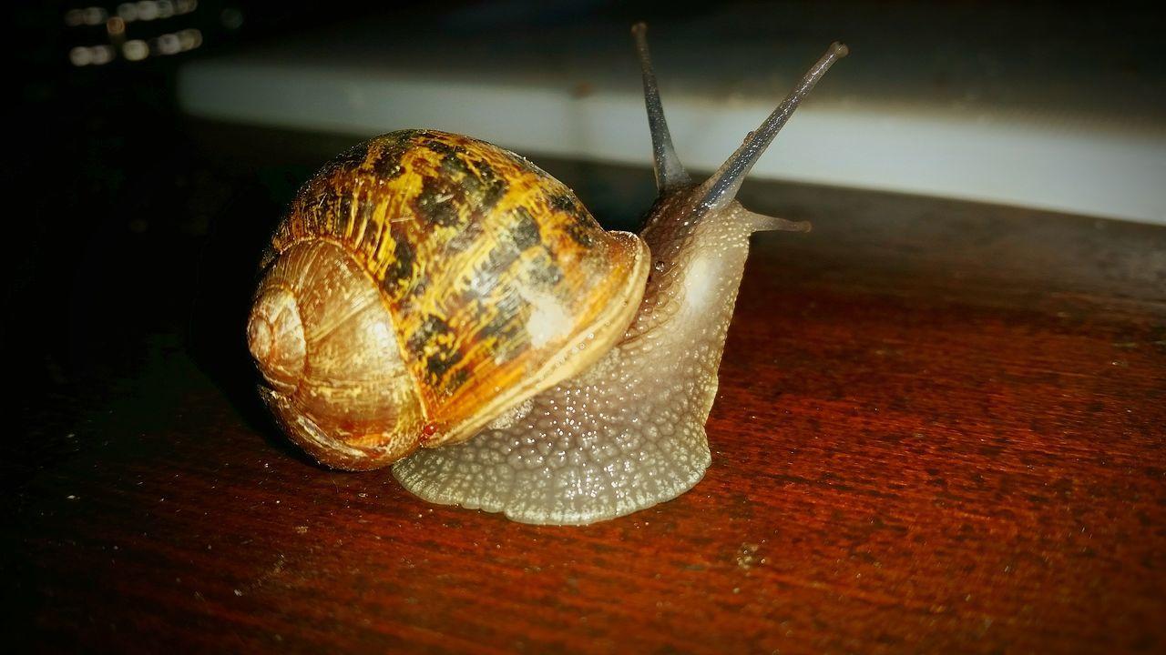 Snail Snail Collection Snail Photography Slak Voorthuizen NL Taking Photos Enjoying Life Smartphonephotography Mobile Photography Mobilephotography Samsung Galaxy S5 Samsungphotography Nature At My Doorstep