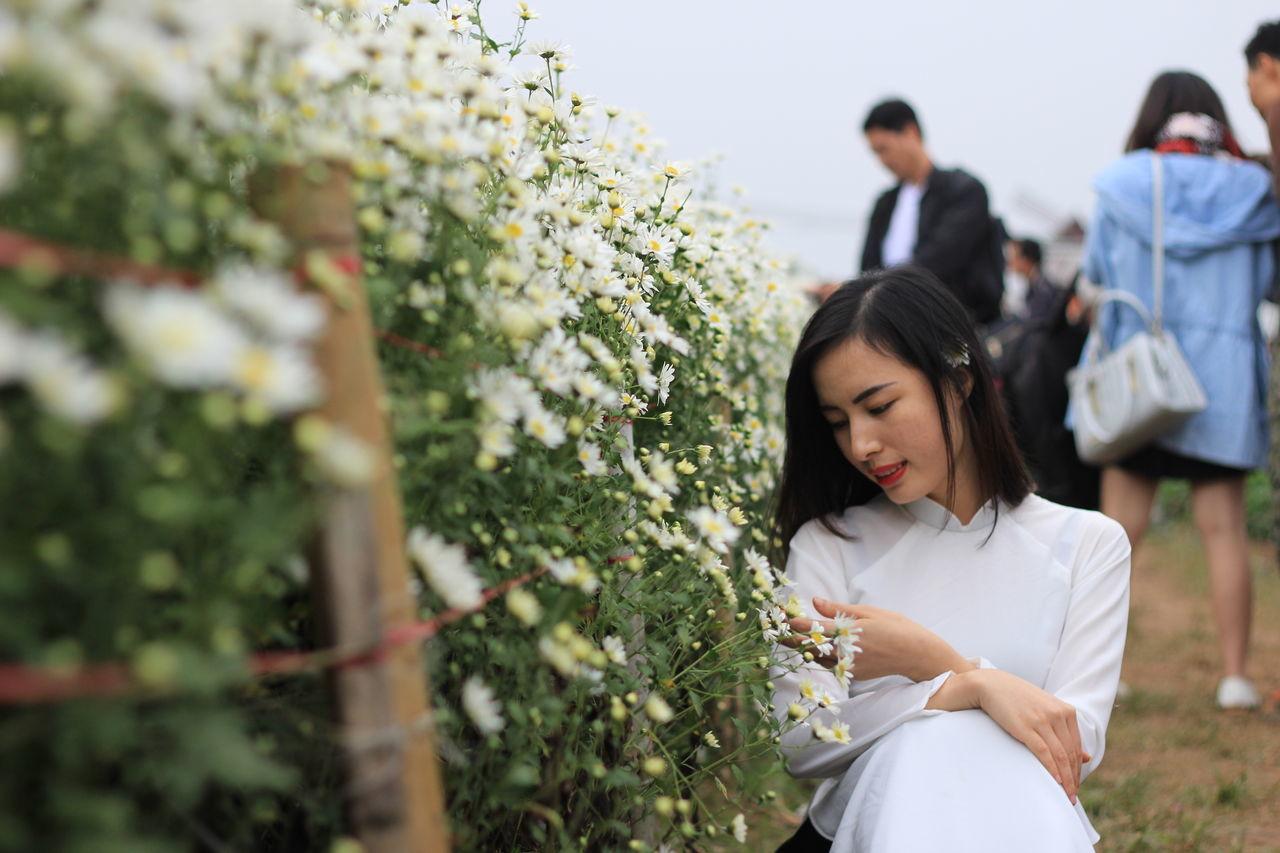 Beautiful stock photos of vietnam, adults only, women, flower, tree