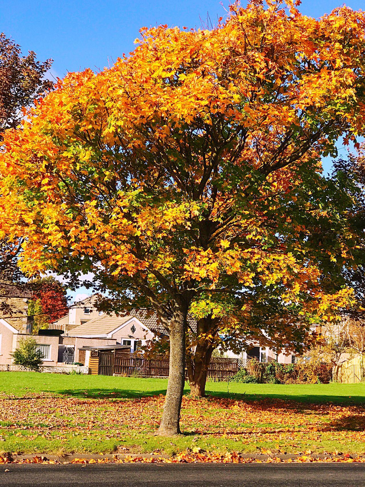 Winter Fallen Leaves Heysham