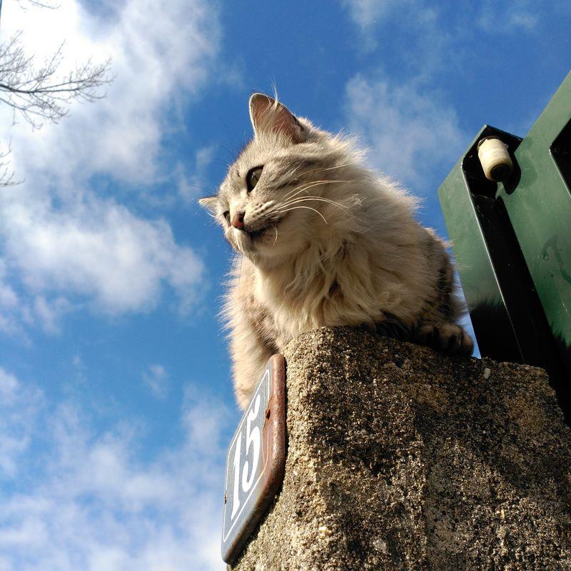 No Edit/no Filter Aldea Cats Porto Do Son