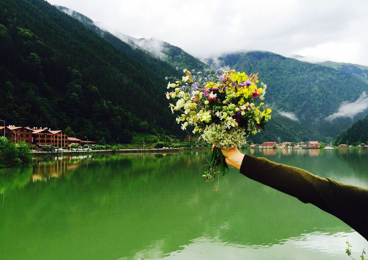 Peace Flower Flowers Colorful Green Green Green!  Trabzon Love ♥