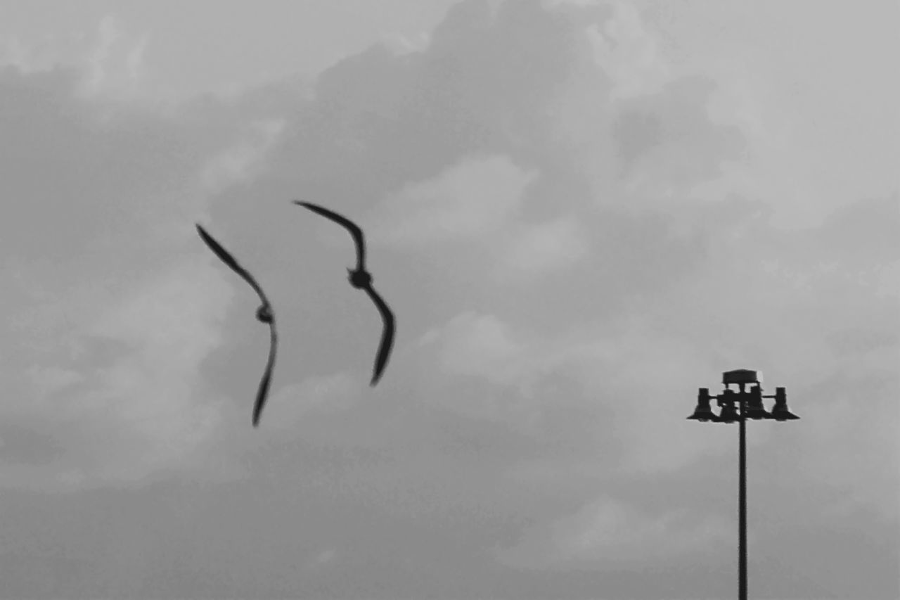 Beauty In Nature Birddog Black And White Black&white Blackandwhite Cloud Cloud - Sky Cloudy Couple Day Flying Low Angle View Monochrome Nature Nature Nature_collection Outdoors Overcast Pole Sky Street Light Tranquility Monochrome Photography