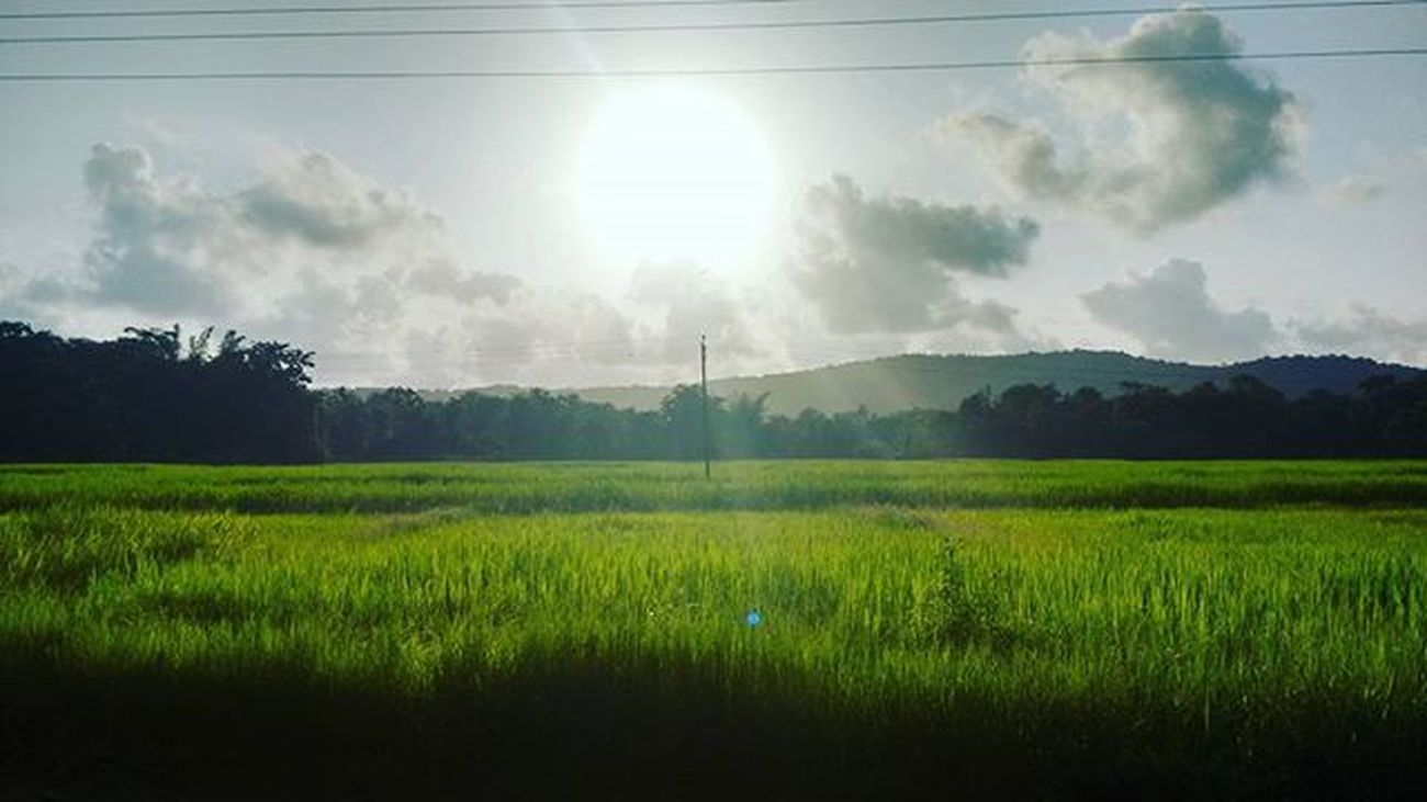 Moto_g2_click Evening_clik Sunset At_village Sun Greenery Nature Like4follow L4like Follweyou F4l F4follow Tagsforlikes Tagsforfollow Ig_addicts