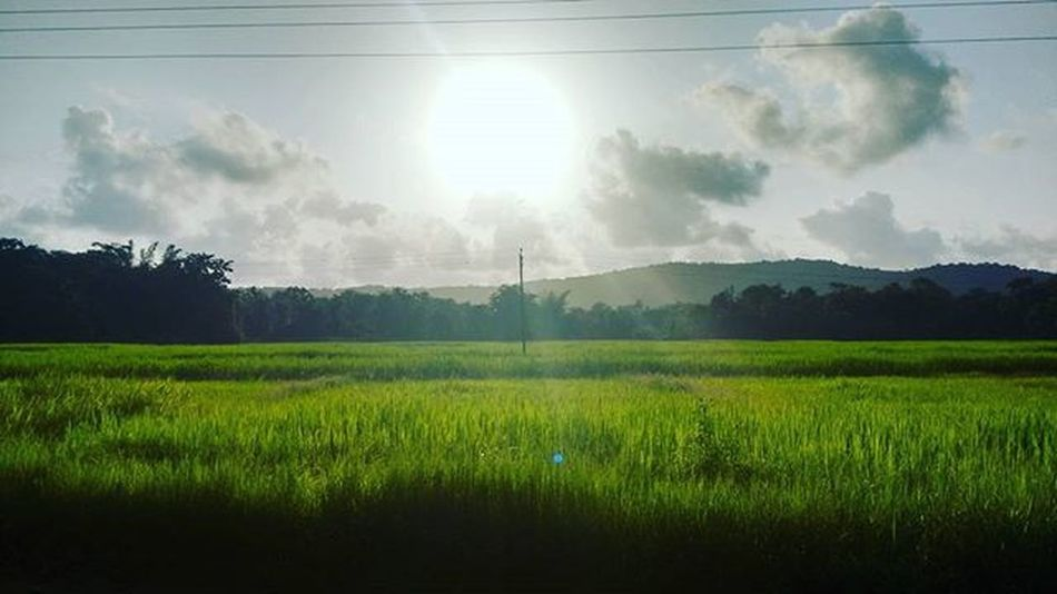 Moto_g2_click Evening_clik Sunset At_village Sun Greenery Nature Like4follow L4like Follweyou F4l F4follow Tagsforlikes Tagsforfollow Ig_addicts