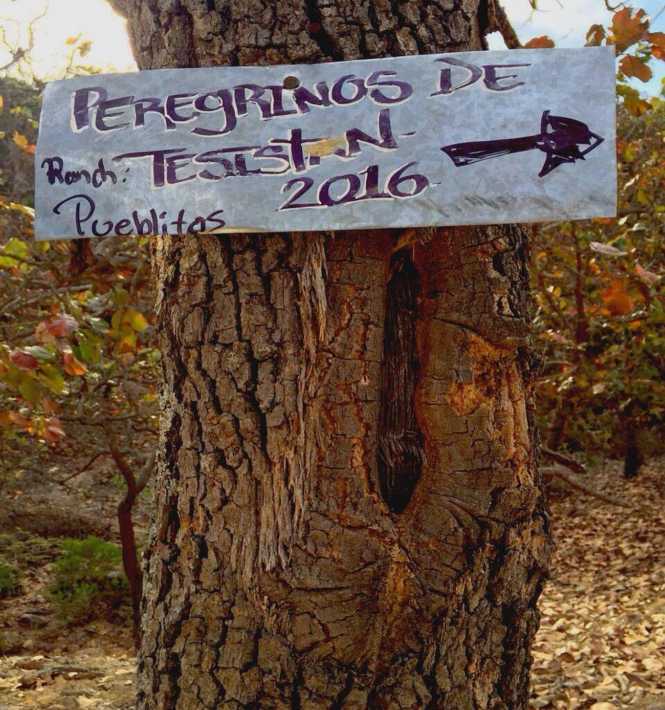 Peregrinos🍃👱🌅 Peregrinos Talpa Caminata Starting A Trip