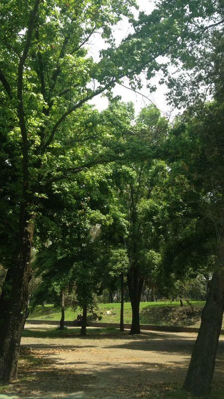 Nature Nature Green