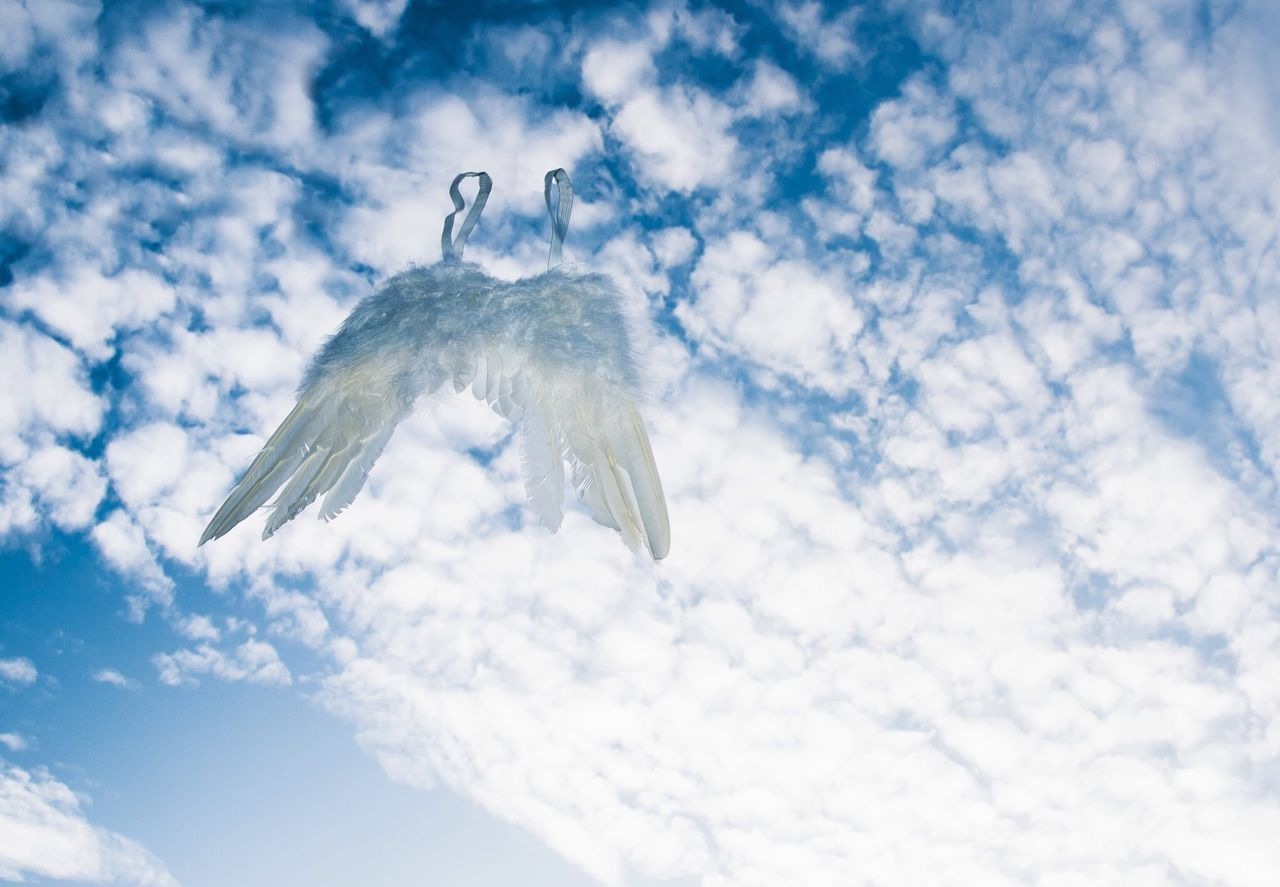 Beautiful stock photos of wings, Abandoned, Angel Costume, Angel Wing, Cloudy