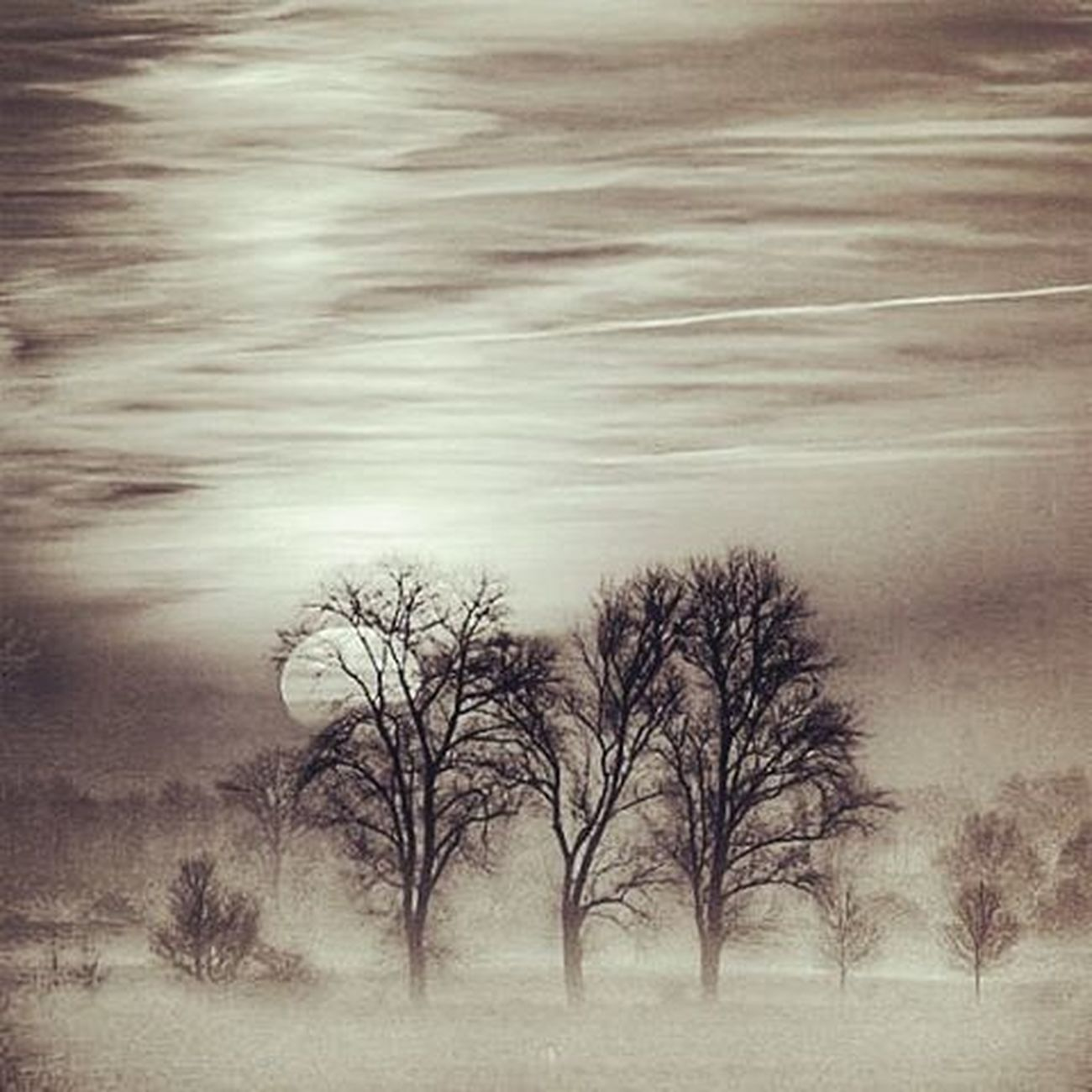 Match_bw Bw_lover Dark_nature Best_bnw_archive Bnw_captures Nature Naturelovers Insta_bw Pocket_bnw Srs_bnw Rsa_bnw Like4like Likeforlike Ayad_bnw Moonlight Wood Darkness Darkwood Night Pocket_trees Photoworld_star_bnw Fiftyshades_of_nature