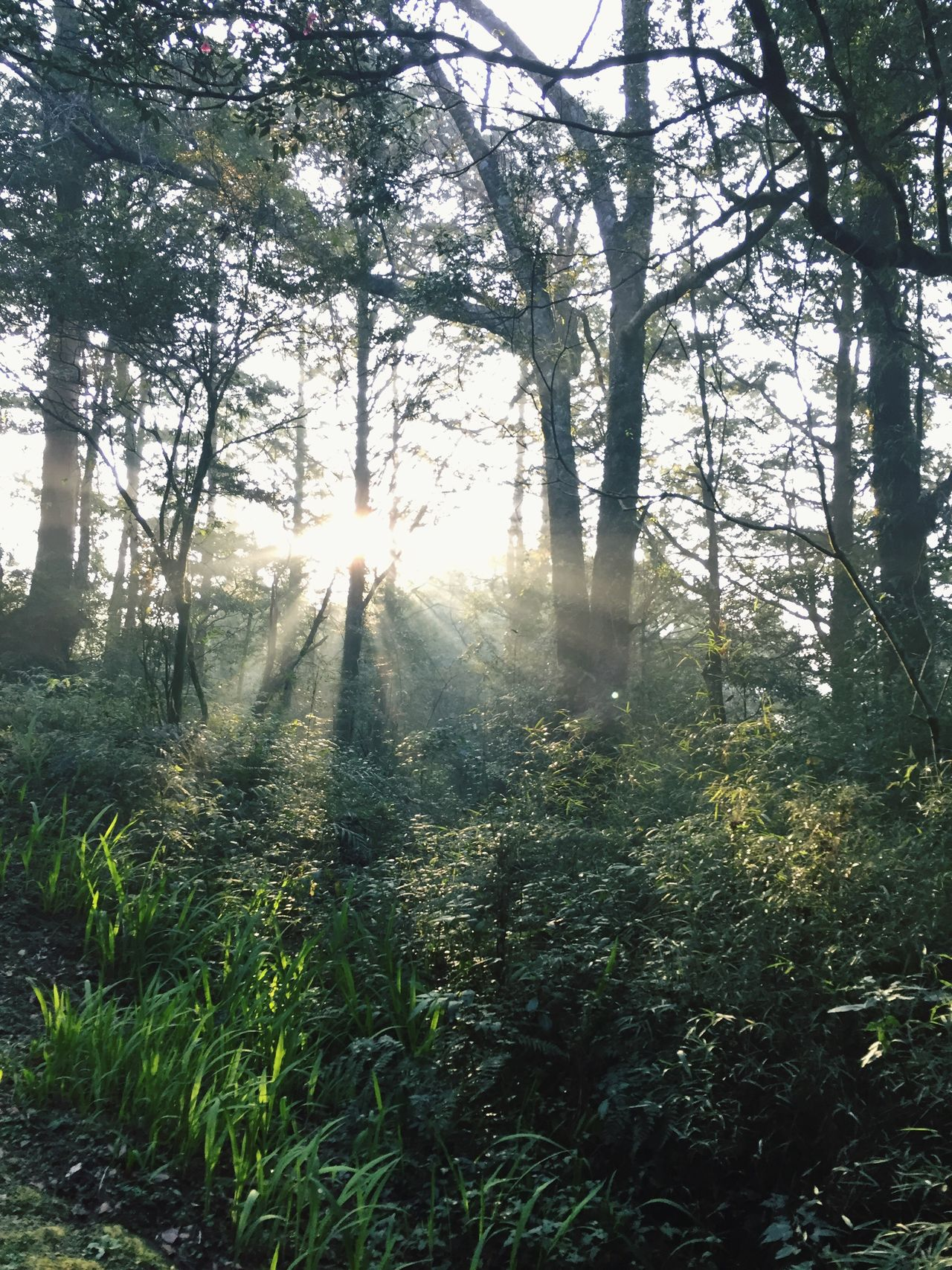 Light Sunbeam Sunlight Tree Forestwalk Nature Forest Green Sunrays From My Point Of View EyeEm Beauty In Nature