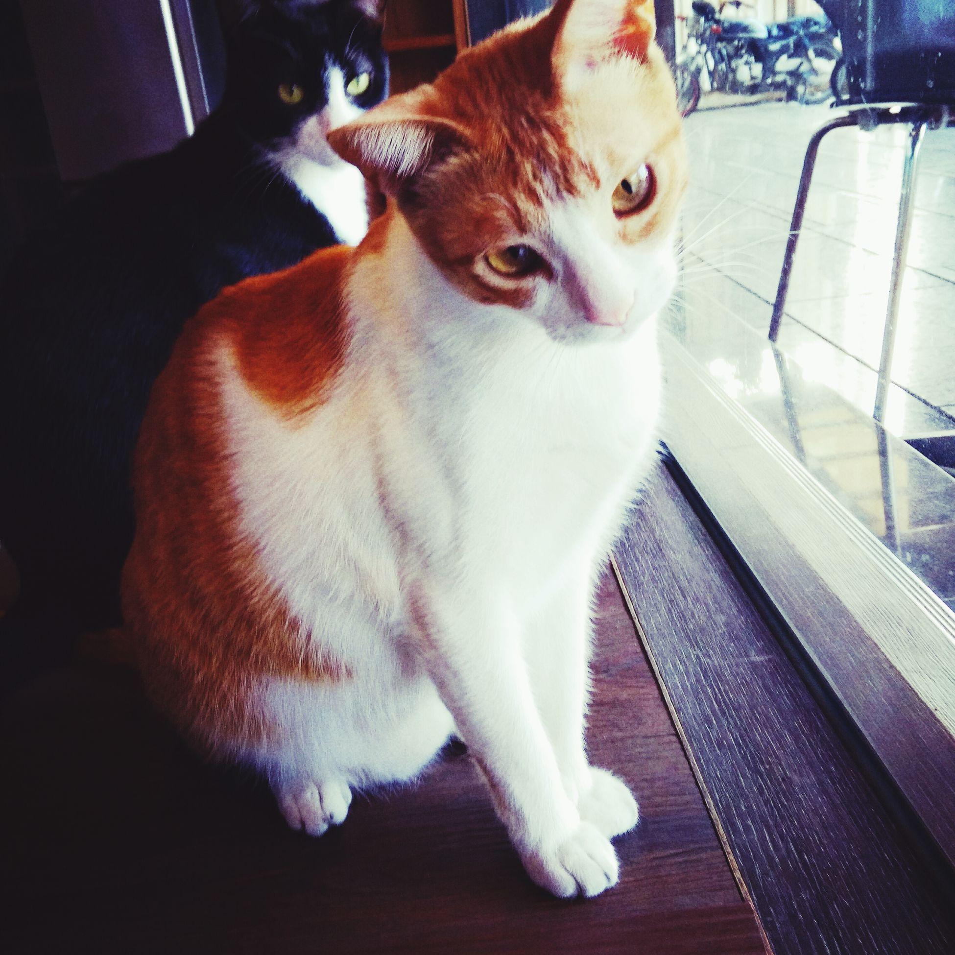 Hi Q guy!! Cat