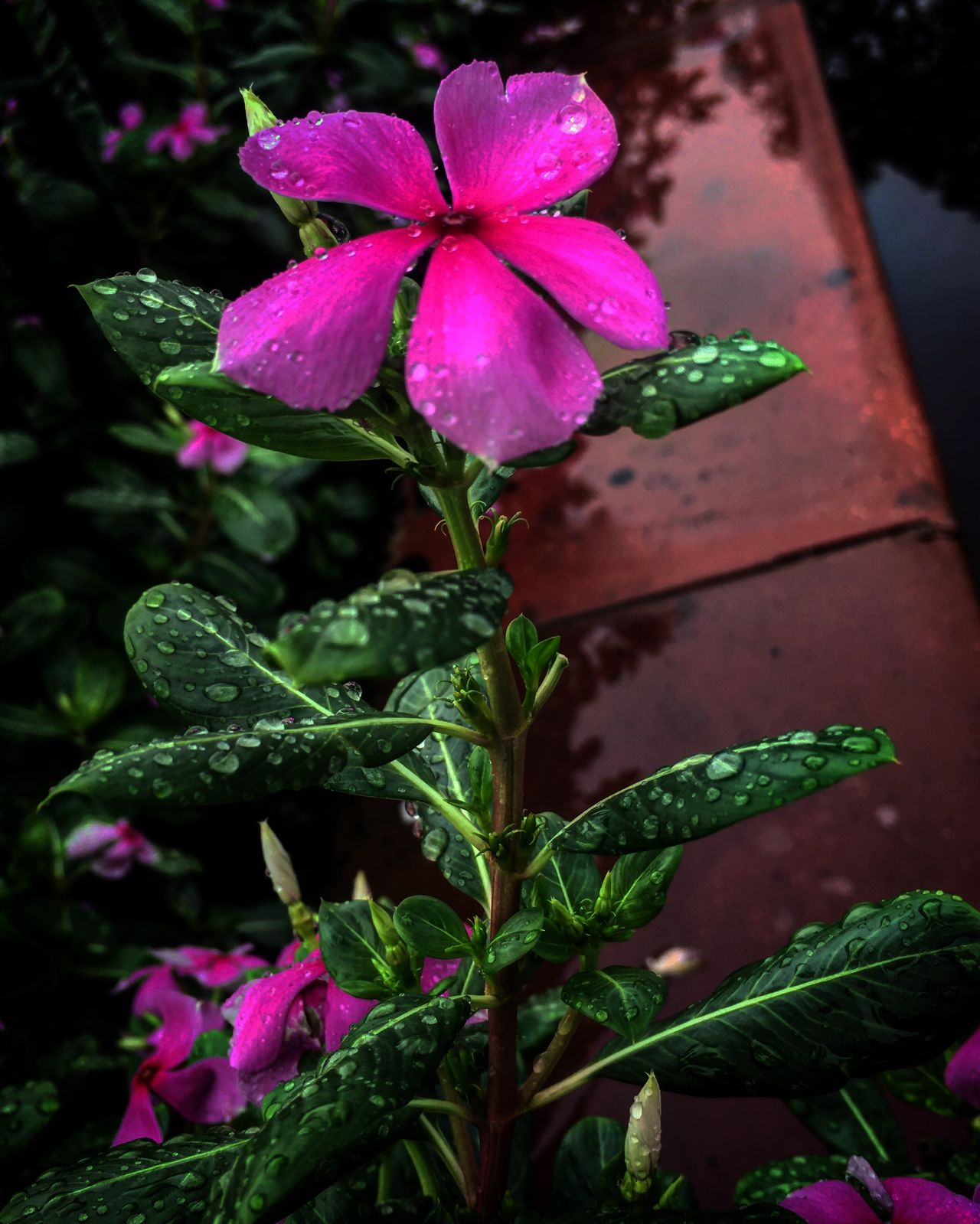 Flowers flourish with the droplet of the rain Rejoice. Happy