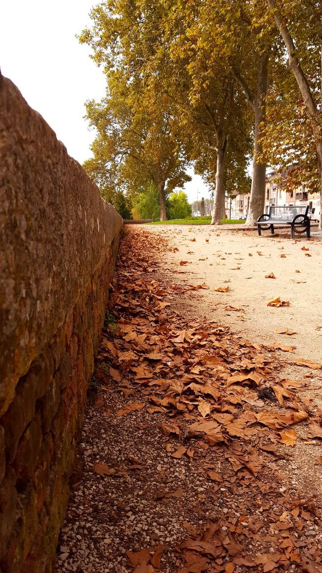 Quai du Tarn Montauban Tree Autumn Leaf Tranquility Clear Sky Change Surface Level Branch Tranquil Scene Day Outdoors The Way Forward Nature Growth Footpath Diminishing Perspective No People Non-urban Scene Scenics Beauty In Nature The Week On EyeEm